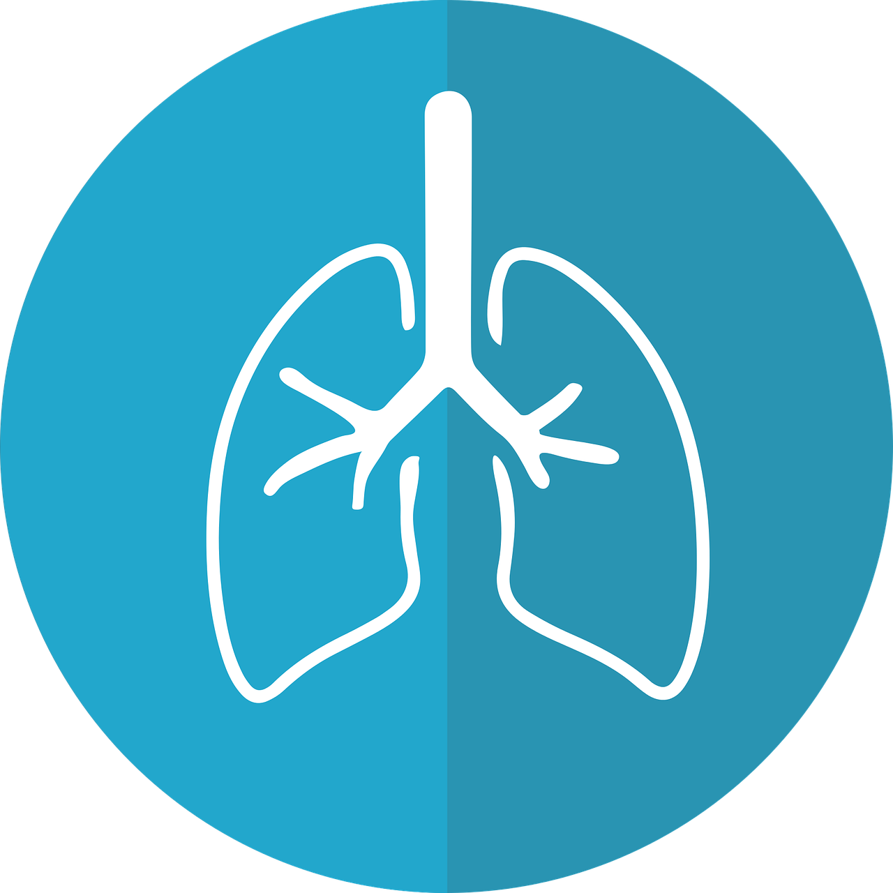 lungs, lung icon, respiration-2803208